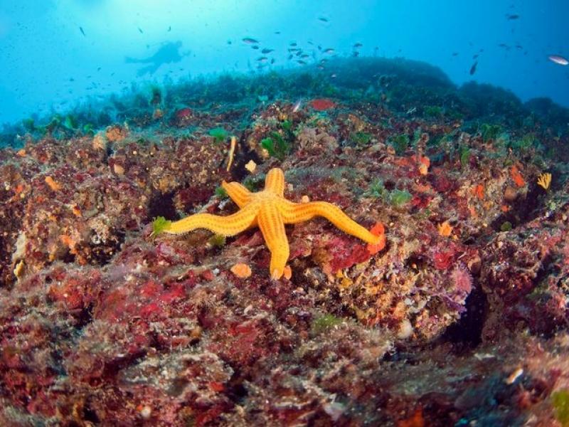 подводное плавание италия