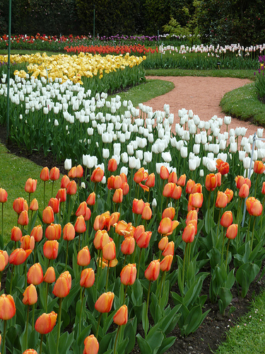 На озере Маджоре каждый год проходит ярмарка тюльпанов