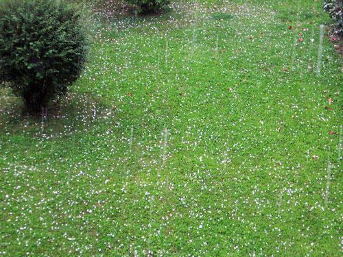 Снежная полянка в августе?