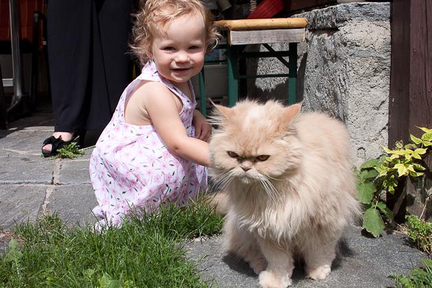Анюта и кот Аллочки