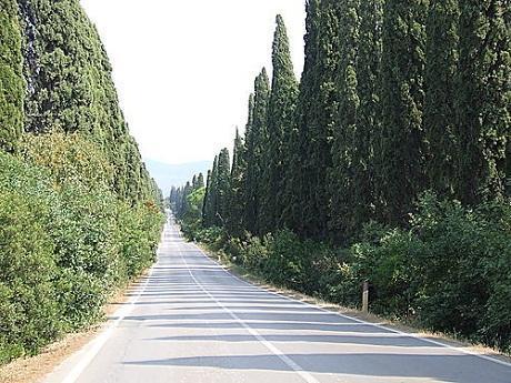 http://italia-ru.com/files/bolgheri.jpg