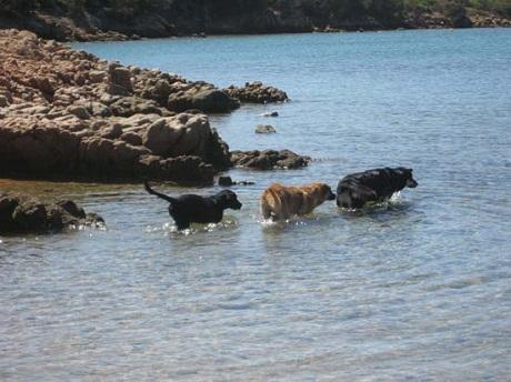 http://italia-ru.com/files/cane-spiaggia_caprera.jpg