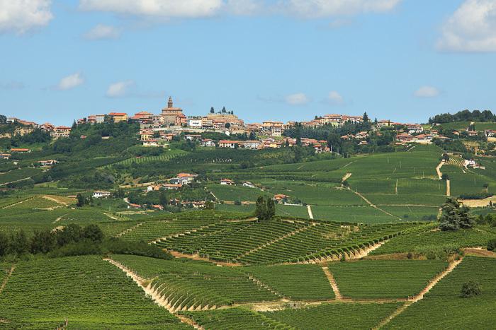 Виноградники вокруг Диано д'Альба