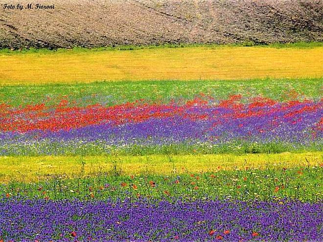 http://www.italia-ru.it/files/fioritura_castelluccio_norcia.jpg