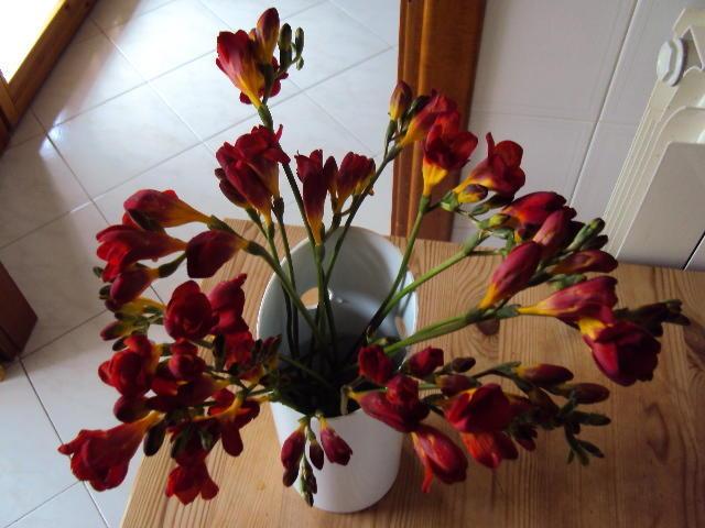 Фрезия, мой любимый цветочный запах ...: italia-ru.com/forums/2011/03/18/freziya-moi-lyubimyi-tsvetochnyi...