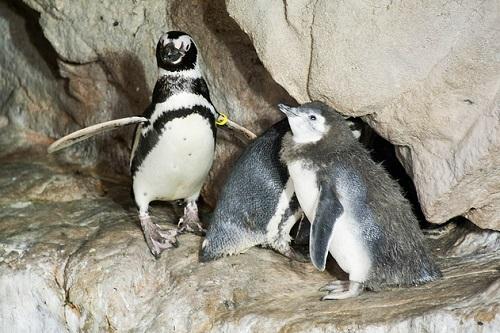 http://italia-ru.com/files/genova-pinguini.jpg