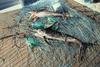 В Италии продолжают активно заниматься незаконным рыбным промыслом