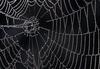 Раскрыт ущё один секрет прочности паутины