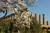 В Агридженто начался Фестиваль миндальных деревьев в цвету