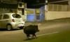В Риме водитель скутера погиб из-за столкновения с диким кабаном
