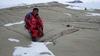 Итальянские ученые обнаружили останки леса в Антарктиде