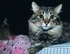Итальянец подал в суд на кота, который, по его мнению, мешает исполнять ему супр