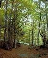 В Тоскане решили премировать тех, кто будет поддерживать порядок в местных лесах