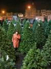 Рождество: в дома прибудут 6,5 миллионов живых елей