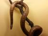 Самые ядовитые змеи в мире будут представлены на выставке в Генуе