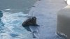 Из Дании в Неаполь: городской зоопарк обогатился двумя малышами тюленей