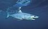 Фьюмичино, 8-летний мальчик поймал метровую акулу