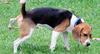 Ваша собака справила малую нужду на тротуаре? Будьте добры убрать за питомцем!