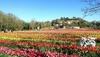 Болонья, 250 тысяч тюльпанов уже цветут: парк откроется 2 апреля!