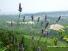 Taste&Sound: среди пейзажей Ланге-Роэро и Монферрато начинается фестиваль отменн
