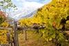 Валле-д'Аоста - первый регион Италии полностью без ГМО