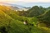 Холмы Просекко включены в список Всемирного наследия ЮНЕСКО