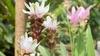 Путешествие по миру растений в самом центре Падуи
