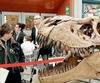 Группа итальянских ученых обнаружила в Тунисе скелет 15-метрового динозавра, кот
