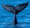 В Триестском заливе появился кит