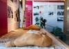 В Музее пармской ветчины появилась новая экспозиция, посвященная соли Сальсомадж