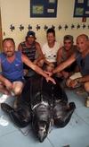 У берегов Лампедузы обнаружена гигантская черепаха