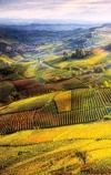 Винные пейзажи Пьемонта празднуют год, проведенный под эгидой ЮНЕСКО