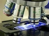Итальянскими учеными сделано открытие молекулы регенерирующей сердце после инфар
