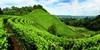 Пьемонт вошел в европейскую десятку лучших мест для посещения