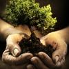 """""""Подари дерево Риму"""""""
