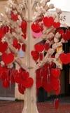 На Сардинии выросло «дерево любви»