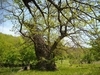 В провинции Рима насчитали 604 вековых дерева