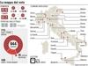 Административные выборы в Италии 2012: курьезные факты и статистика