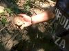 В провинции Рима обнаружена новая археологическая зона