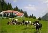 Агротуризм в Италии все более популярен