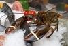 Кассационный суд Италии постановил, что помещение живых омаров в лед - акт насил