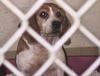 В Италия собираются запретить разведение животных для научных экспериментов