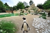Праздники в Биопарке Рима: с 4 по 10 января вход бесплатный для детей до 10 лет