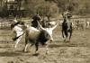 Тоскана: Маремма предлагает туристам стать ковбоем на день