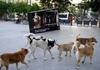Итальянский политик для решения проблемы с бездомными собаками на Сардинии предл