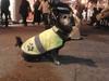 В Сан-Ремо появился пес-путешественник