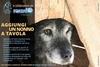 В Аквиле стараются обеспечить собакам достойную старость