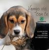 Legambiente объявила кампанию против жестокого обращения с животными