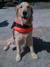 В Каорле собака спасла тонувшего мальчика