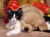 Бесплатные ветеринарные осмотры для собак и кошек в Италии